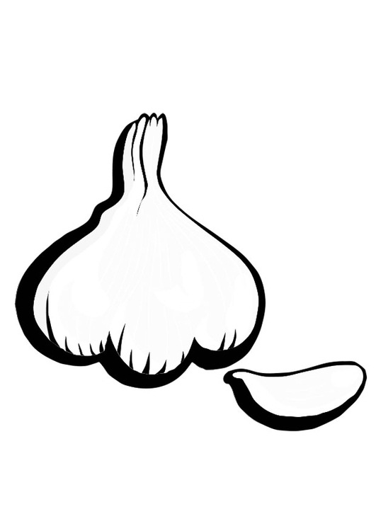 Coloring page garlic
