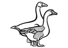 Coloring pages geese