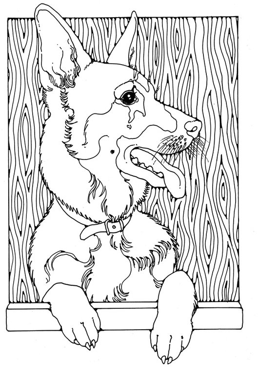 Coloring page German shepherd