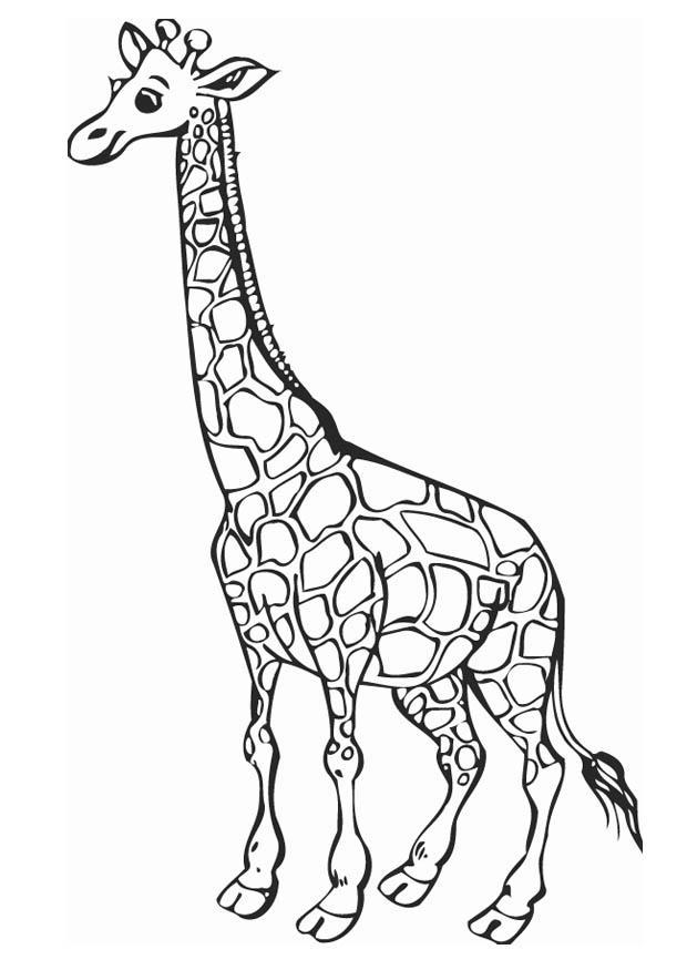 Coloring page Giraffe img 12758
