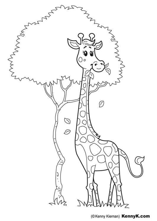 giraffen bilder zum ausmalen  ausmalbilder