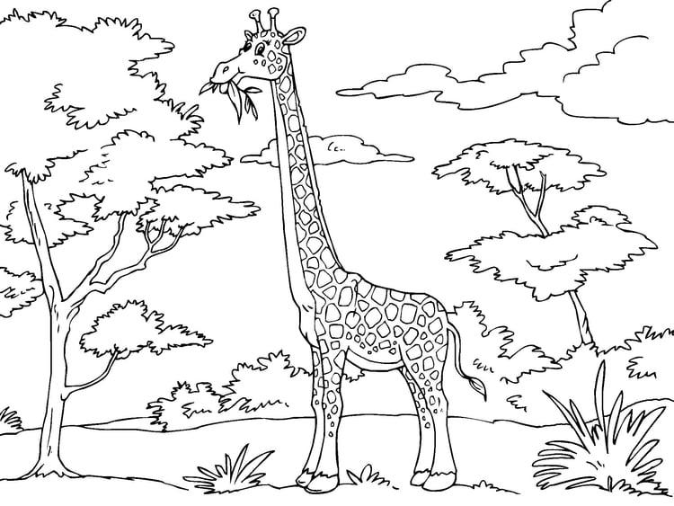 coloring page giraffe - Coloring Page Giraffe