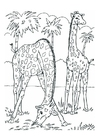 Coloring pages giraffes