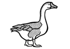 Coloring pages goose