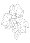 Coloring pages grapevine