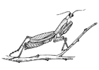 Coloring page grasshopper - praying mantis