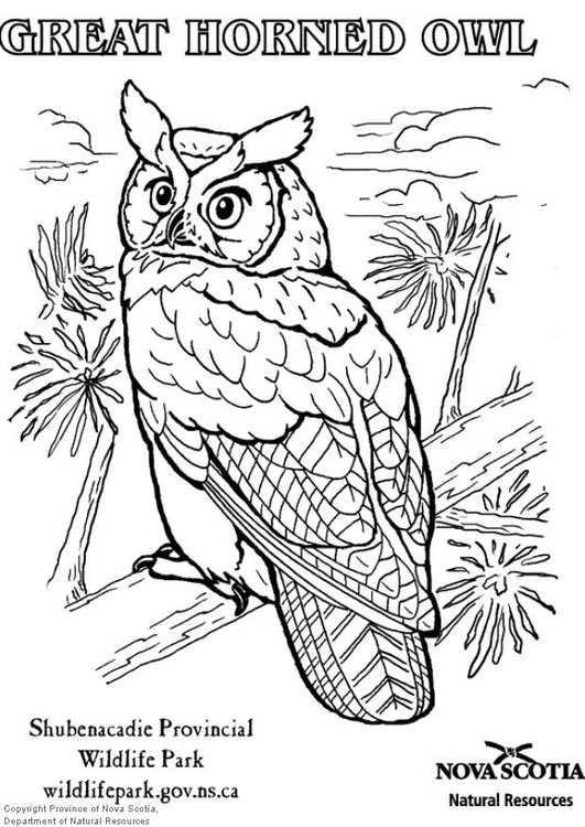 Coloring page great horned owl