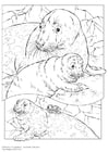Coloring pages grey seal