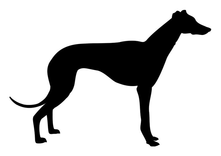Coloring page greyhound
