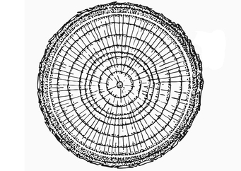 Coloring page growth rings