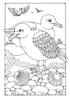 Coloring page Gull
