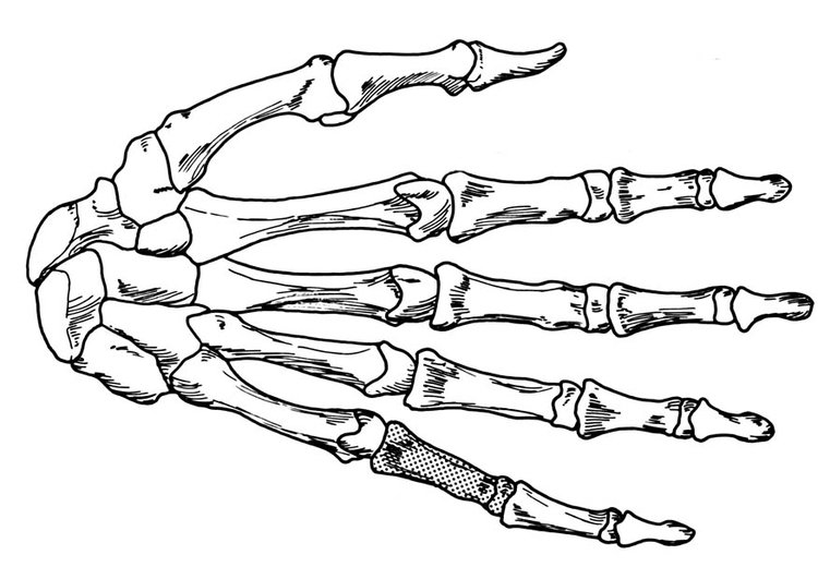 Coloring page hand - skeleton