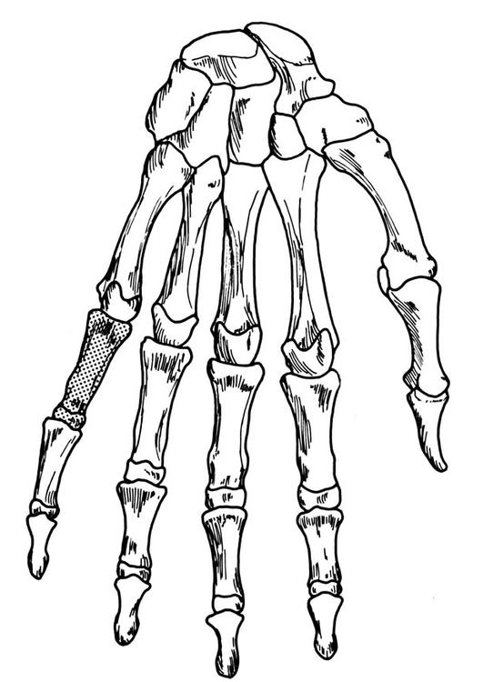 Coloring Page Hand Skeleton Img 18906 Skeleton Coloring Page
