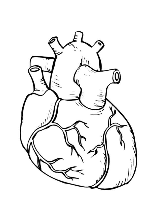 Heart Coloring Pages, Where Can I Find Heart Coloring Pages, Heart