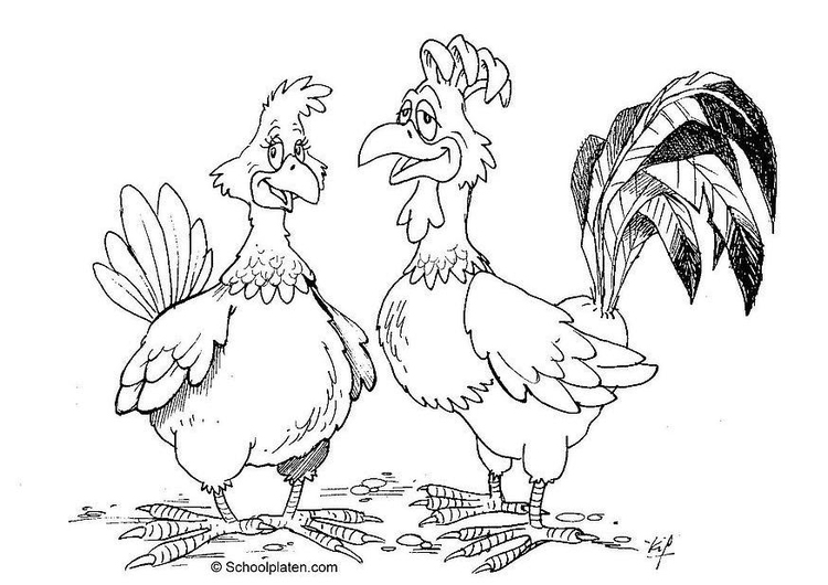 Coloring page hen and rooster