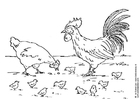 Coloring page hen, rooster and chickens