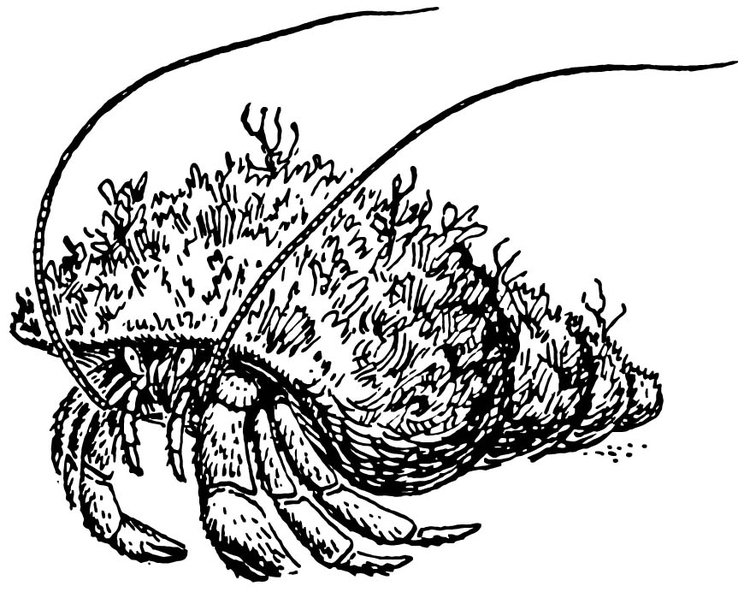 Coloring page Hermit Crab