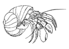 Coloring pages hermit crab