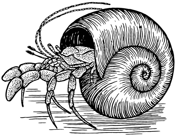 Coloring page hermitcrab