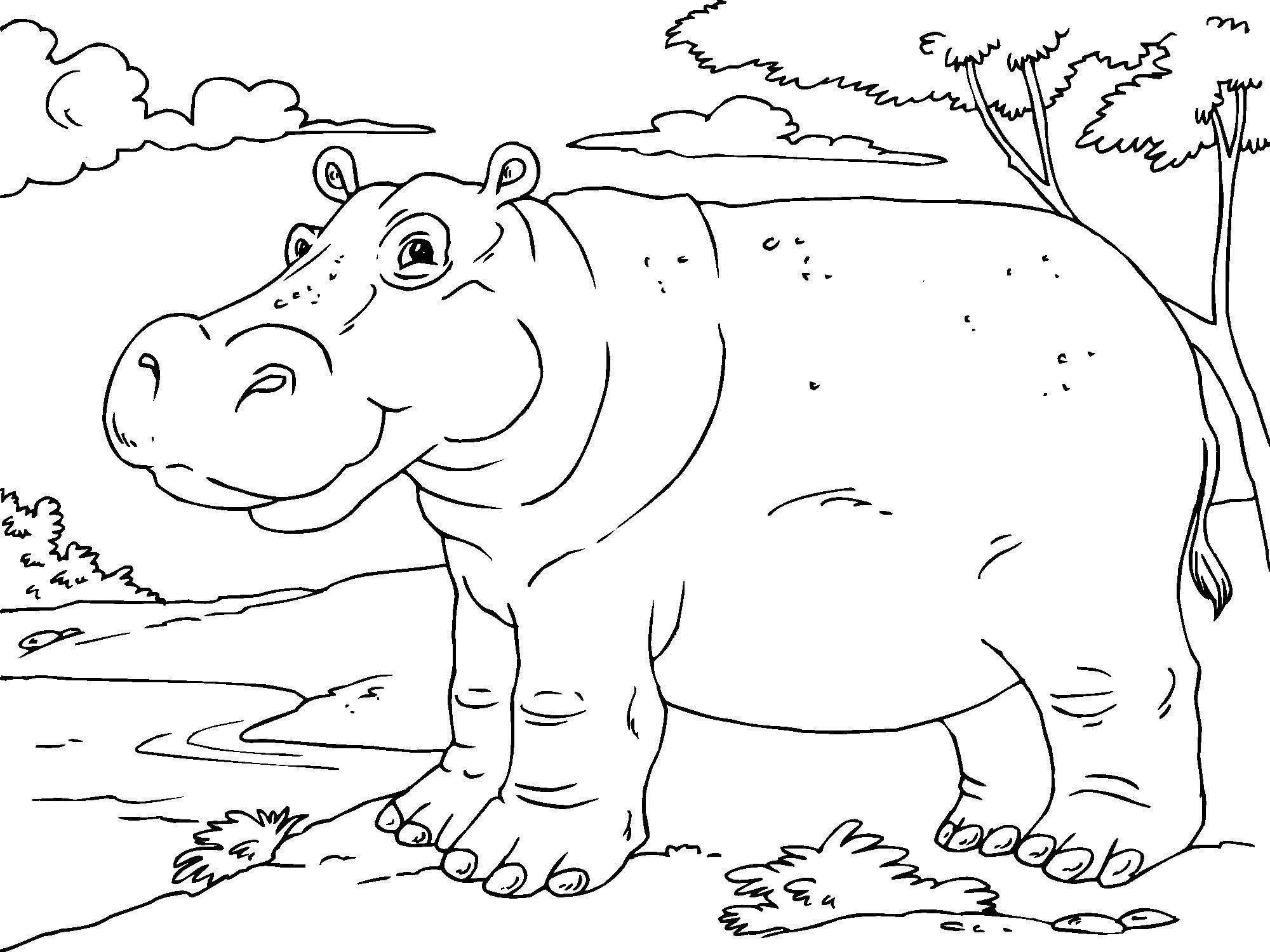 Coloring Page Hippopotamus