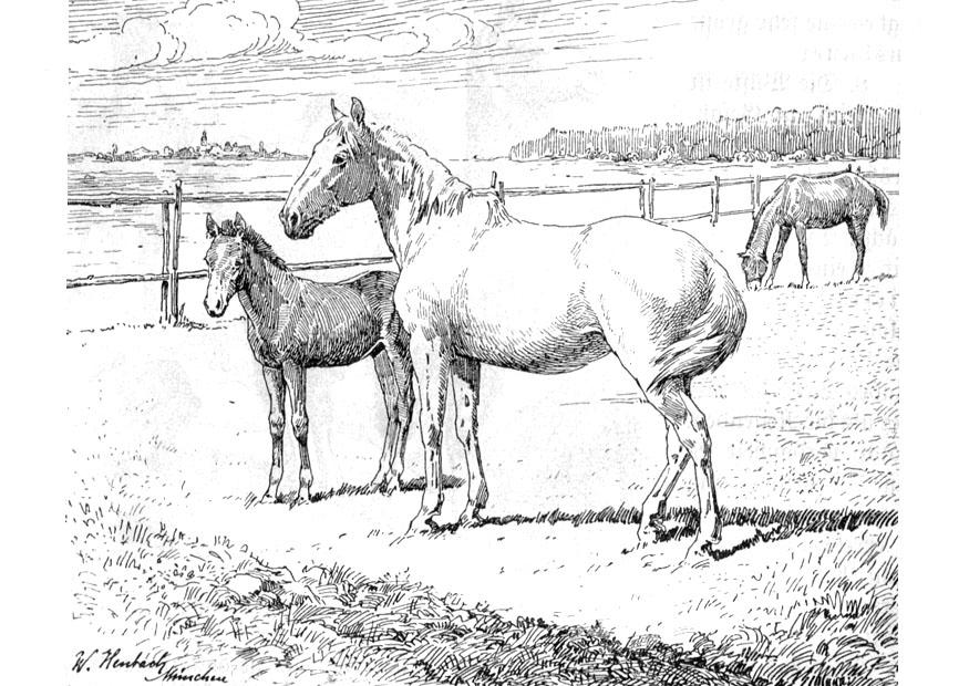 download large image - Coloring Pages Horses Foals