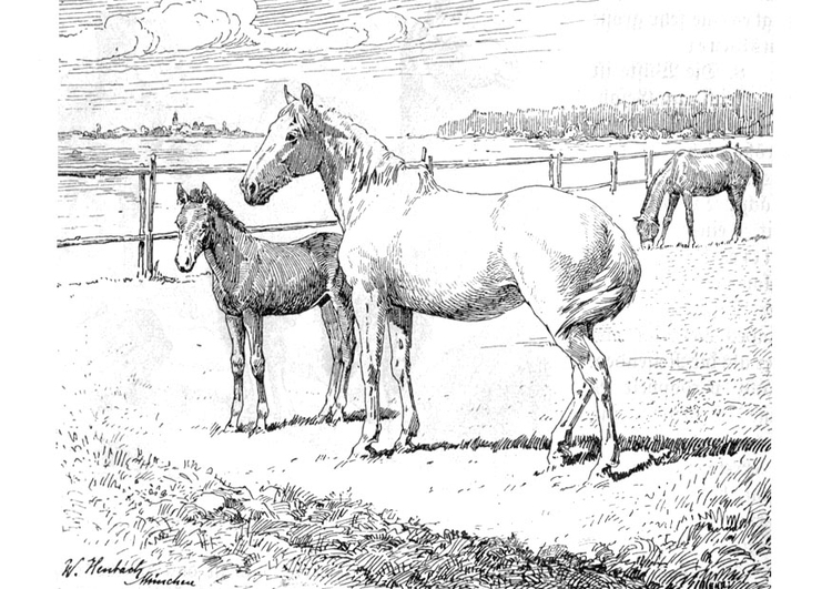 coloring page horse and foal