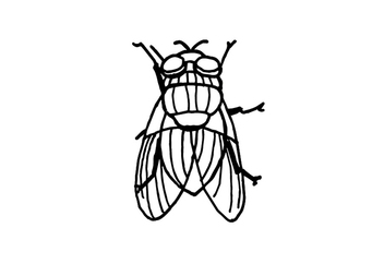 Coloring page housefly