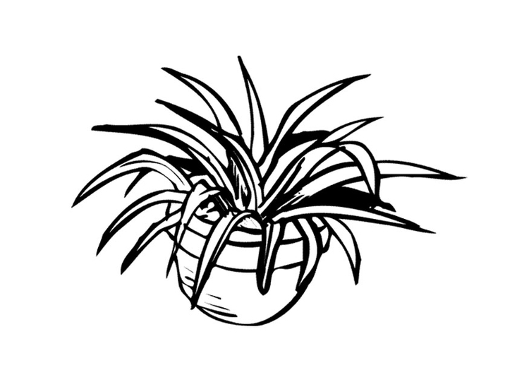 Coloring page houseplant