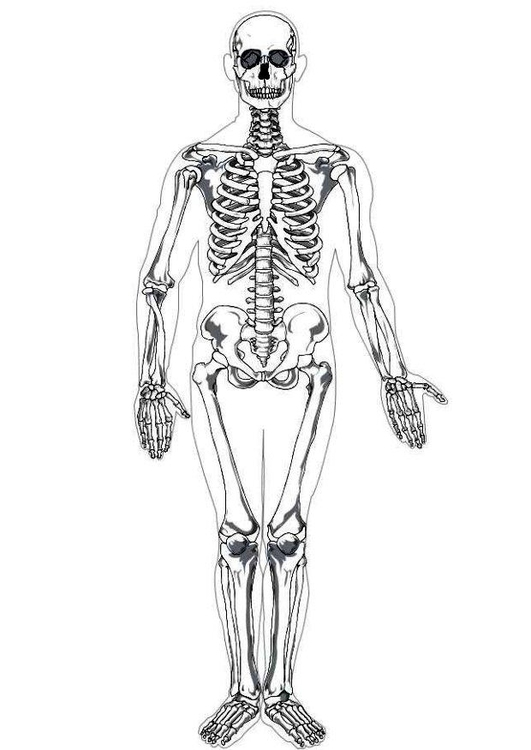 - Coloring Page Human Skeleton - Free Printable Coloring Pages