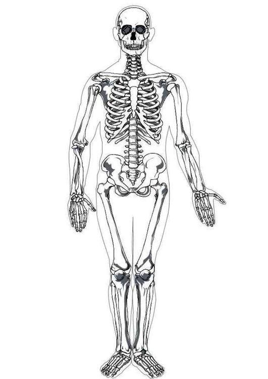 coloring page human skeleton - img 7622., Skeleton