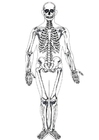 Coloring page human skeleton