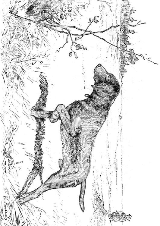 Coloring page hunting dog img