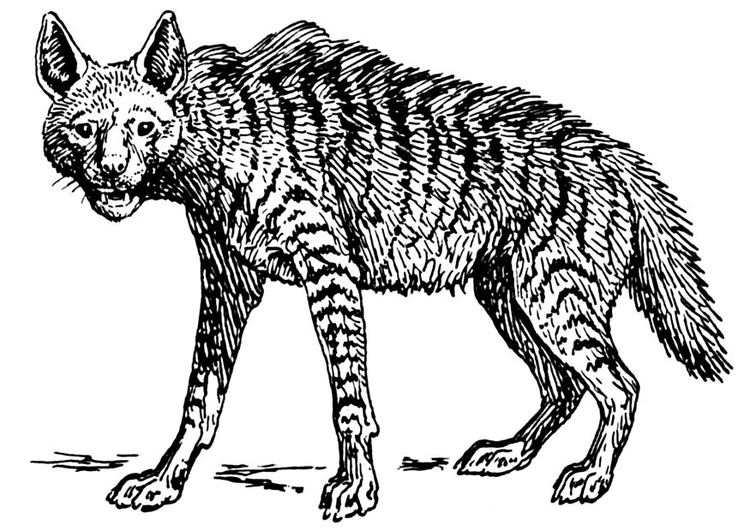 Coloring page hyena