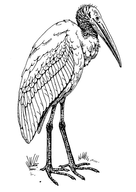 Coloring page ibis