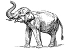Coloring page indian elephant