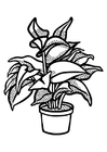 Coloring pages indoor plant
