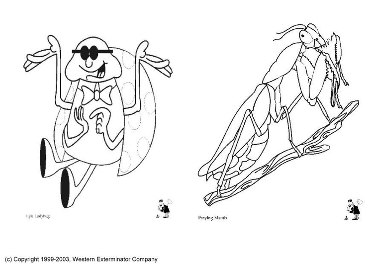 Coloring page insects