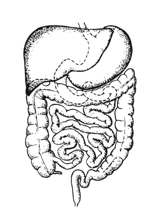 Coloring page intestines