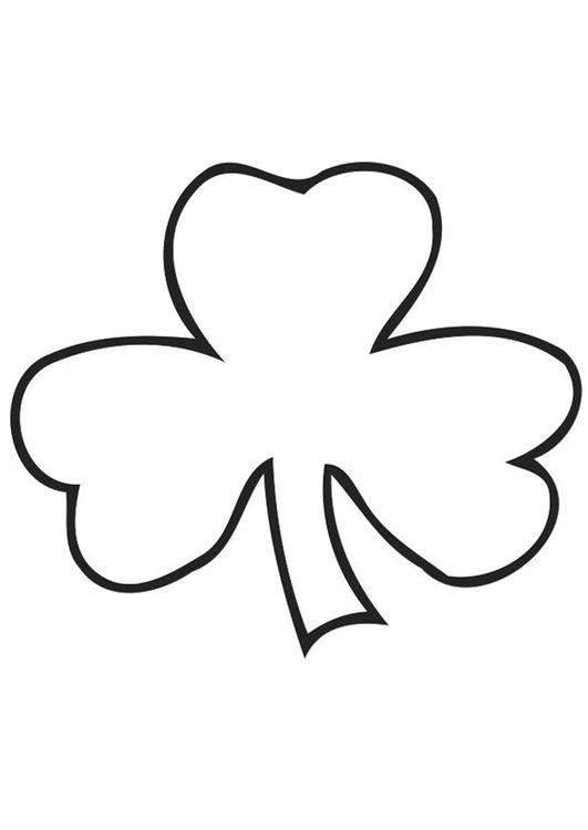 Irish clover - Shamrock