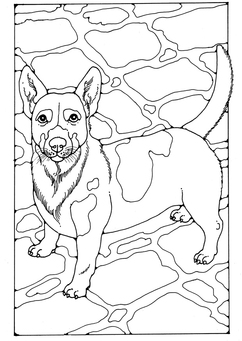 Coloring page Jack Russel
