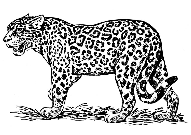 Coloring page jaguar