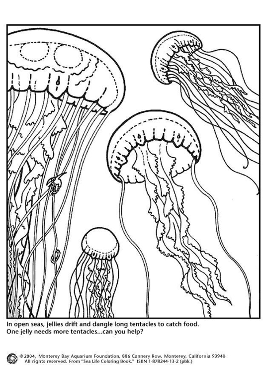 Coloring page jellyfish