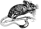 Coloring pages jerboa