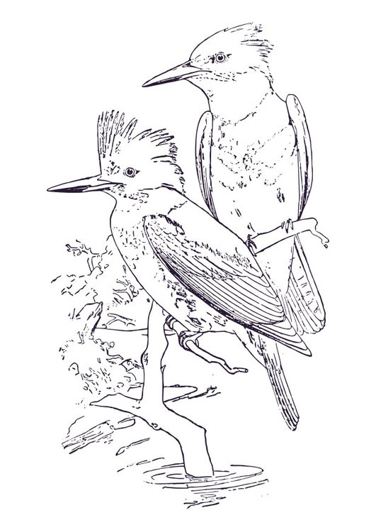Coloring page kingfisher