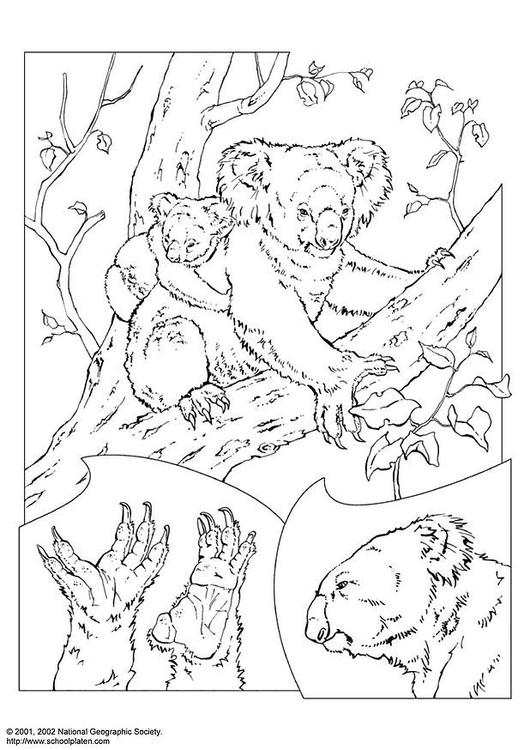 Koala Coloring Page - Super Simple   750x530
