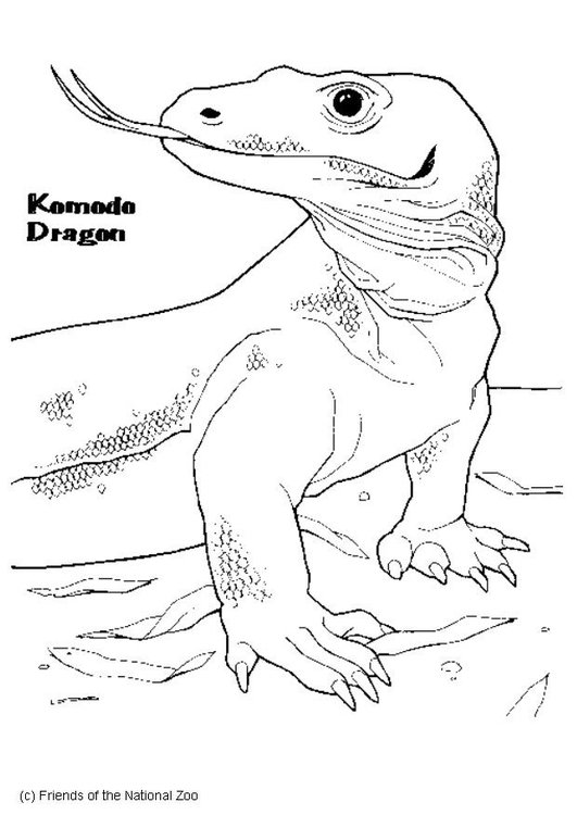 Coloring page komodo dragon
