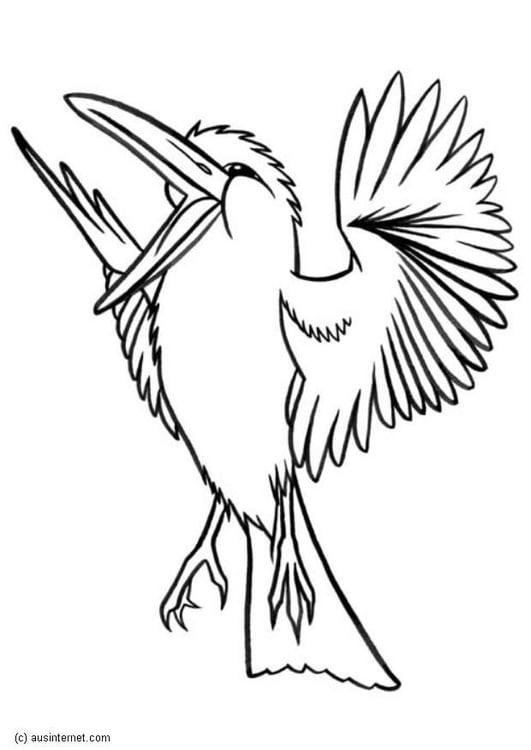 Coloring Page Kookaburra