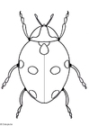 Coloring page ladybird