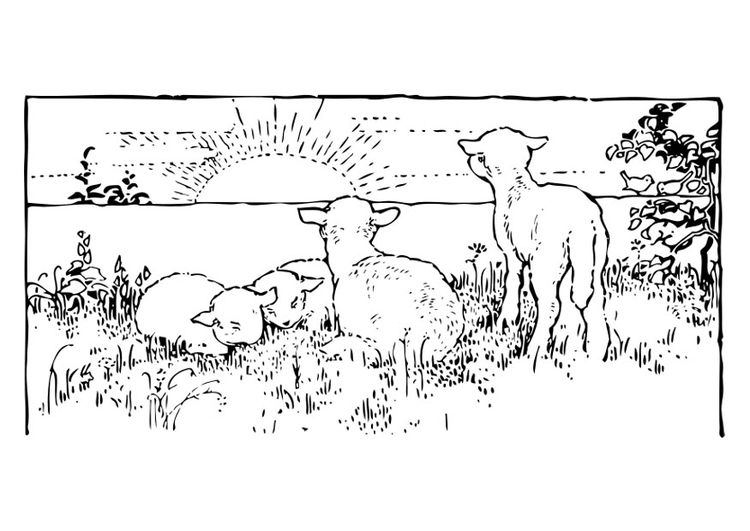 coloring page landscape with lambs free printable