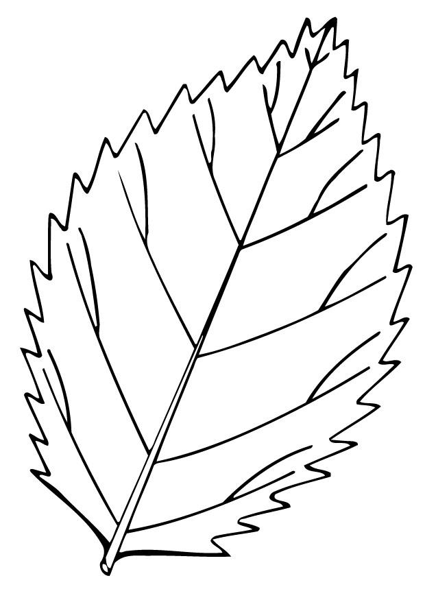 coloring page leaf  img 12948
